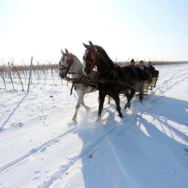 Održana Vinceška u najmodernijoj vinariji u regiji